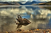 West Glacier Framed Prints - Stumped Framed Print by Adam Jewell