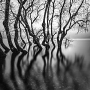 Mono Acrylic Prints - Submerging Trees Acrylic Print by John Farnan