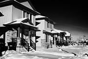 Suburbia Posters - suburbian houses covered in snow during bright crisp winter day Saskatoon Saskatchewan Canada Poster by Joe Fox