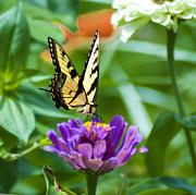 Summer Digital Art - Summer Butterfly by Bill Cannon