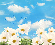 Flying Birds Prints - Summer Daisies Print by Christopher and Amanda Elwell