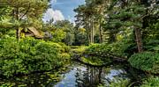 Adrian Evans - Summer Garden