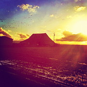 Anna Tesch Posters - Sun on Barn Poster by Anna Tesch