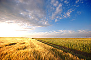 Country Photos - Sunset field by Michal Bednarek