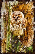 Old Face Framed Prints - Tawny Owl Framed Print by Chris Thaxter
