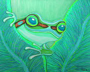 Frog Drawings - Teal frog by Nick Gustafson