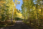 Colors Prints - Telluride Colorado Fall Print by Michael J Bauer