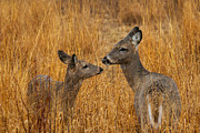 Metro Park Metal Prints - Tender Moment  Metal Print by James Marvin Phelps