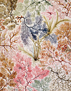 Textile Design Print by William Kilburn