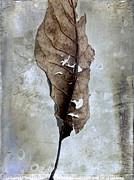 Back View Prints - Textured leaf Print by Bernard Jaubert