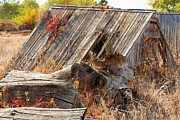 Bill Kesler Photos - The Autumn Of Nebraska by Bill Kesler