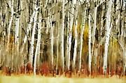 Andrea Kollo - The Birches