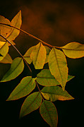 Fall Colors Photos - The Colors of Autumn  by Saija  Lehtonen