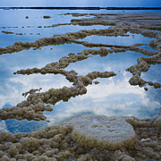 Beauty Mark Photos - The Dead Sea by Mark-Meir Paluksht