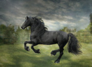 Friesian Posters - The Gathering Storm Poster by Fran J Scott