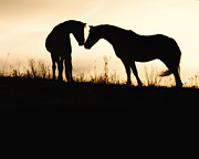 Equine Photography Photos - The Greeting by Ron  McGinnis