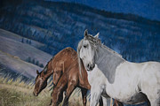 Quarter Horses Pastels Framed Prints - The Grey Framed Print by Joni Beinborn