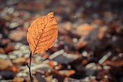 Hannes Cmarits - the leaf