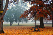 Park Benches Photos - The Leaves Have Fallen by Carlie Hensley