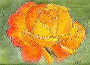 Garden Drawings - The Rose by Eva Ason