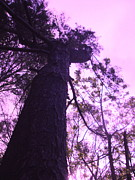 Tree And Wood Photography - The Test Of Time by Allen n Lehman