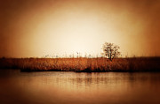 HJBH Photography - The tree