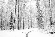 Winter Road Scenes Posters - The Way Through Poster by Susan Crossman Buscho