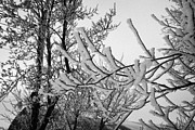 Conditions Framed Prints - thick hoar frost on bare tree branches during winter Forget Saskatchewan Canada Framed Print by Joe Fox