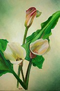 Tracey Harrington-Simpson - Three Calla Lilies