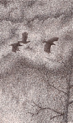 Blackbird Drawings - Three Crows by Wayne Hardee
