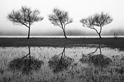 Gaspar Avila Acrylic Prints - Three trees Acrylic Print by Gaspar Avila