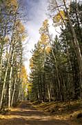 Saija  Lehtonen - Through The Woods