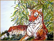 Judy Minderman Framed Prints - Tiger Relaxing Framed Print by Judy Minderman