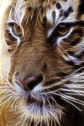 Tilly Metal Prints - Tiger  Metal Print by Tilly Williams