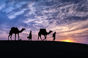 Camels Photos - Time To Go Home by Mukesh Srivastava
