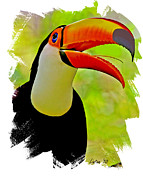 Toucan Digital Art Posters - Toco Toucan 3 Poster by Larry Linton