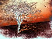 Dan Carmichael - Tree in Snow in the Blue...