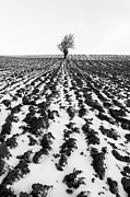 Lone Tree Photo Prints - Tree in snow Print by John Farnan