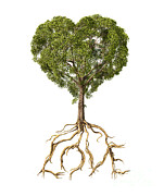Heart Healthy Digital Art Posters - Tree With Foliage In The Shape Poster by Leonello Calvetti