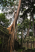 Joerg Lingnau - Trees of Ta Prohm