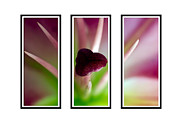 Red Gladiolus Photos - Triptych by Stylianos Kleanthous