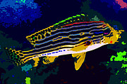 Salt Water Fish Prints - Tropical colors Print by David Lee Thompson