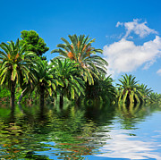 Island Art - Tropical exotic jungle and water by Michal Bednarek