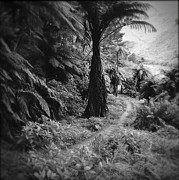 Black And White Landscape Photograph Posters - Tropical forest Poster by Les Cunliffe