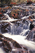 Stream Posters - Trues Brook Gorge Water Fall Poster by Edward Fielding