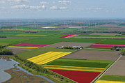 Agronomy Framed Prints - Tulips Fields, Zeewolde Framed Print by Bram van de Biezen