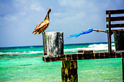 Sea Birds Pyrography Prints - Tulum Print by Alen Pirlant