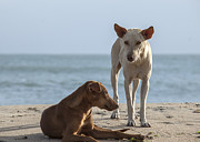 Patricia Hofmeester - Two homeless dogs on the...