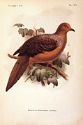 Orange And Brown Wings Prints - Unknown, Color Lithographs Print by Everett