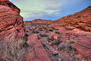 Earth Tone Photo Framed Prints - Valley of Fire State Park Two Framed Print by Josh Whalen